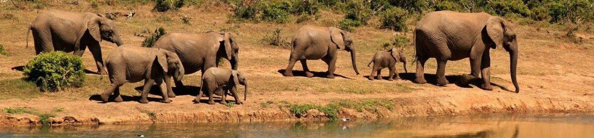 Průvodce Afrikou pro cestovatele