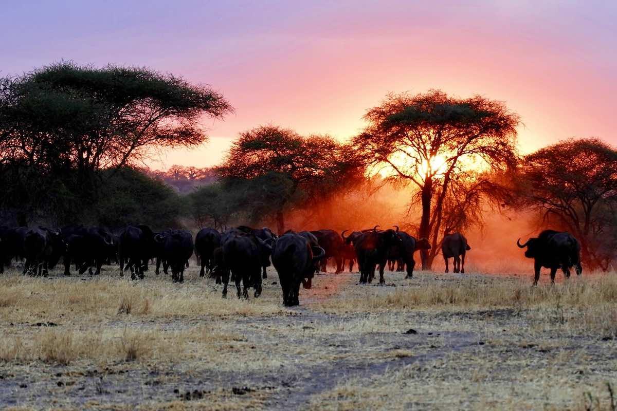 Národní parky v Africe